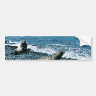 Leones marinos de Steller Pegatina De Parachoque