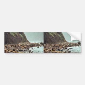 Leones marinos de Steller en Haulout Pegatina De Parachoque