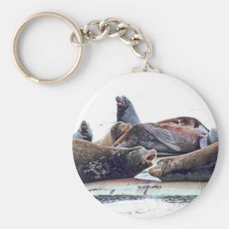Leones marinos de Steller Llavero Redondo Tipo Pin
