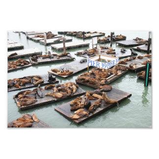 Leones marinos del embarcadero 39 en San Francisco Fotografía