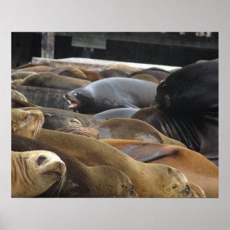Leones marinos en el embarcadero póster