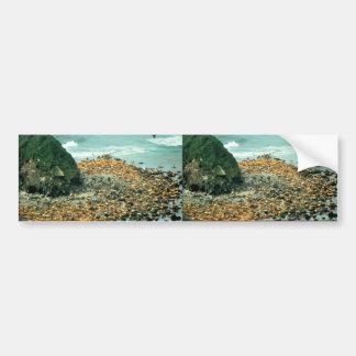 Leones marinos en Haulout Etiqueta De Parachoque