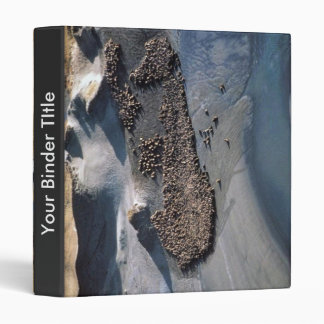 Leones marinos en Haulout - visión aérea