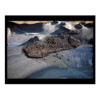 Leones marinos en Haulout - visión aérea Postales