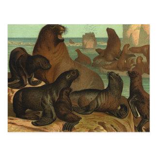 Leones marinos en la playa, animal del vintage de postal
