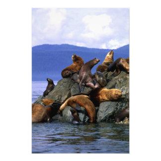Leones marinos estelares Alaska; LOS E.E.U.U. Fotografía
