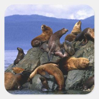 Leones marinos estelares Alaska; LOS E.E.U.U. Pegatina Cuadrada