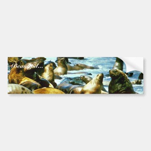 Leones marinos etiqueta de parachoque