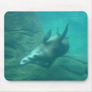 Leones marinos Mousepad
