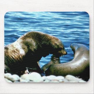 Leones marinos mousepads