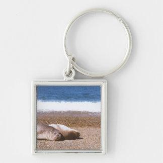 Leones marinos que descansan sobre la playa llavero cuadrado plateado