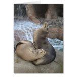 Leones marinos tarjetón