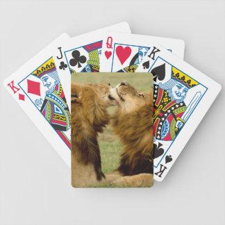 Leones masculinos (Panthera Leo) que preparan, Baraja De Cartas