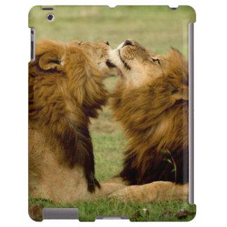 Leones masculinos (Panthera Leo) que preparan, Funda Para iPad