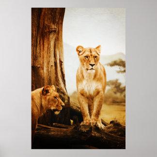 Leones Posters