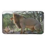 leones que se acoplan, Panthera leo, Kgalagadi Funda Para iPod