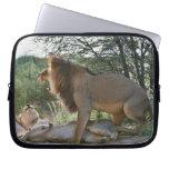 leones que se acoplan, Panthera leo, Kgalagadi Funda Portátil