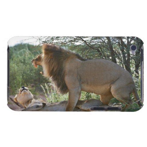 leones que se acoplan, Panthera leo, Kgalagadi iPod Touch Fundas