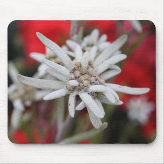 Leontopodium alpinum mouse pad