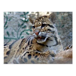leopard-1 nublado 4x6 postales