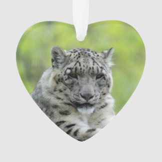 Leopard_2015_0310