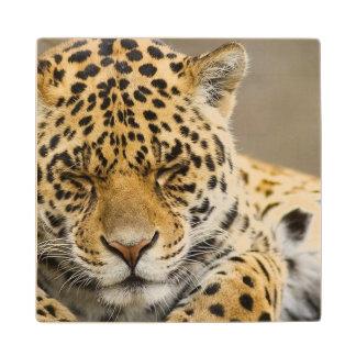 leopard-21 wood coaster