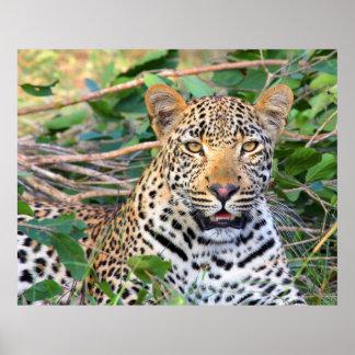Leopard 6 poster