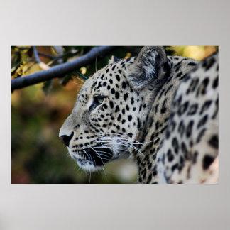 Leopard - Animal Poster