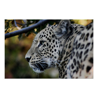 Leopard - Animal Print