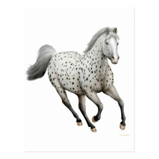 Leopard Appaloosa Horse Postcard