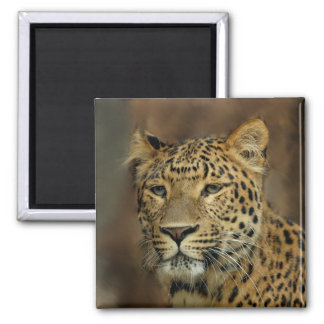 leopard art 2 inch square magnet
