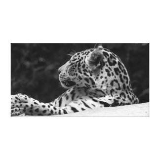 """Leopard Awaking"" Canvas Print"