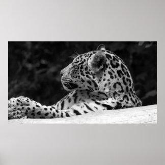 """Leopard awaking"" Poster"