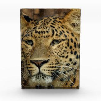 Leopard Award
