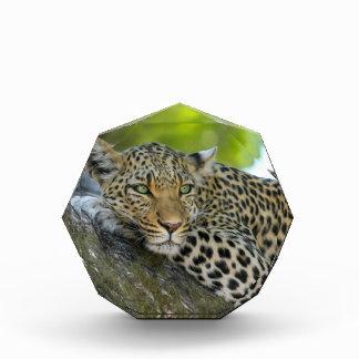 Leopard Acrylic Award