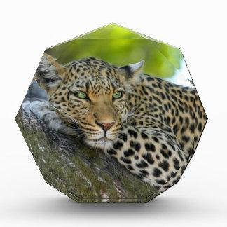 Leopard Awards