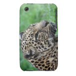 leopard Blackberry bulged case