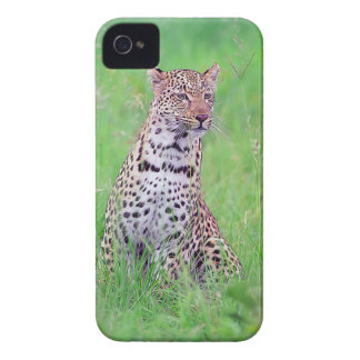 Leopard iPhone 4 Cases