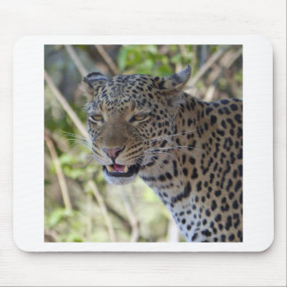 Leopard Cat Animal Africa Jungle Country Destiny Mouse Pad