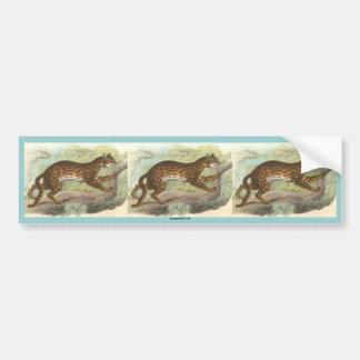 Leopard-Cat, Felis bengalensis Bumper Sticker