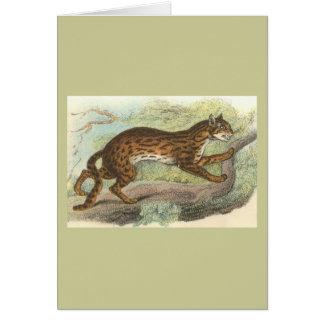 Leopard-Cat, Felis bengalensis Greeting Card