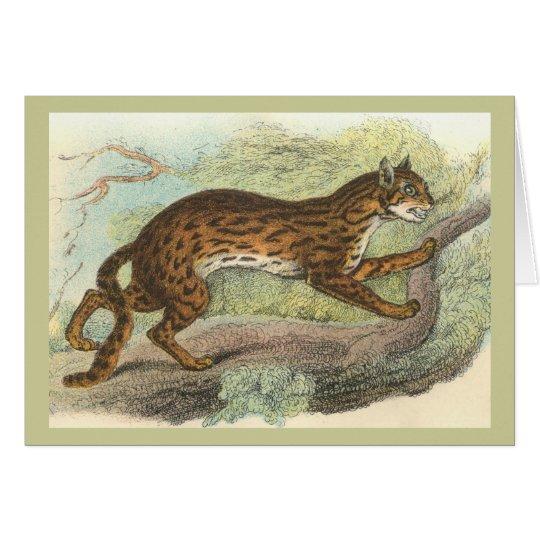 Leopard-Cat, Felis bengalensis Card