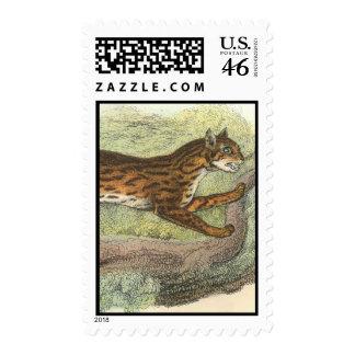 Leopard-Cat Felis bengalensis Stamp