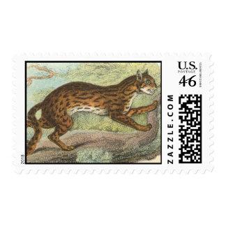 Leopard-Cat Felis bengalensis Stamps