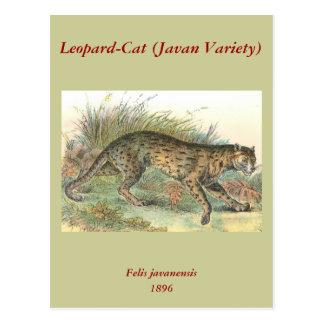 Leopard-Cat (Javan Variety) Felis javanensis Postcard