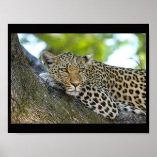 leopard cat wild print