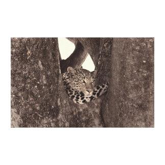 Leopard climbing tree,Botswana, Africa Canvas Print