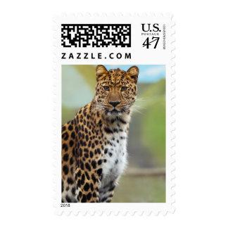 Leopard closeup postage