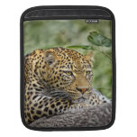 Leopard Crouch Sleeve For iPads