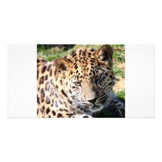 Leopard cub baby cute photo card, gift photo card
